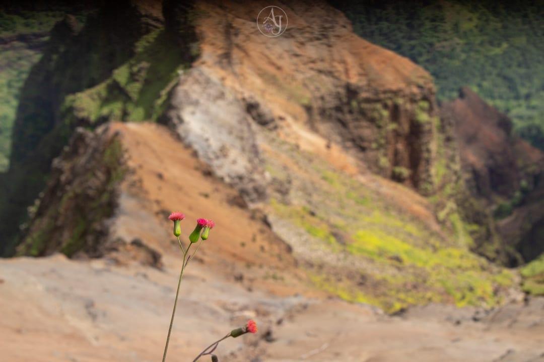 waimea canyon, waimea Hawaii