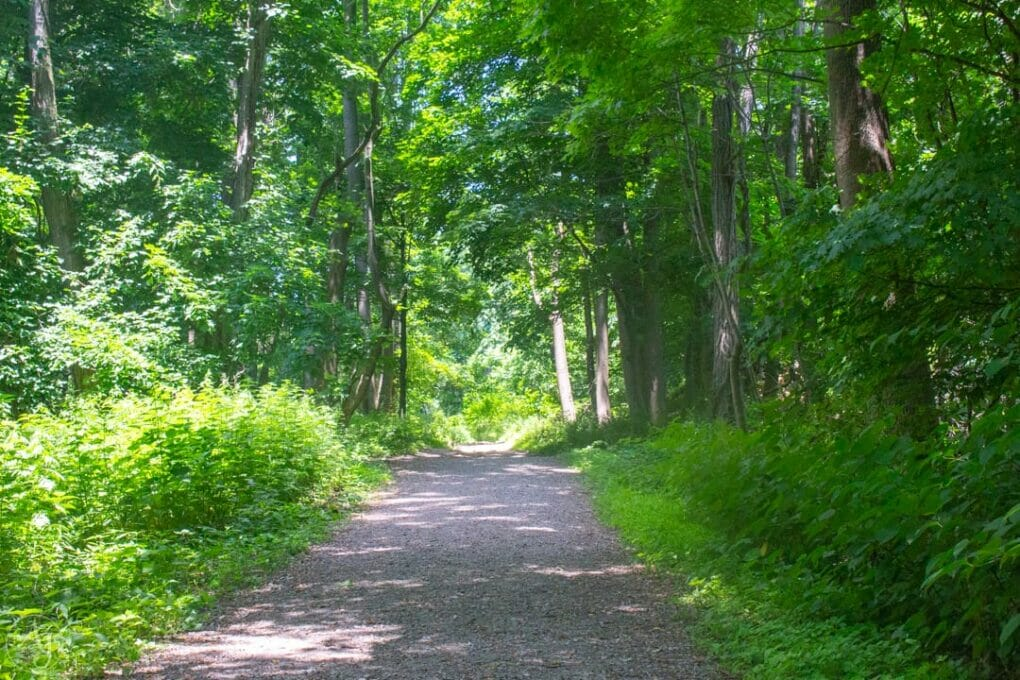 Trail in the Hudson Highlands