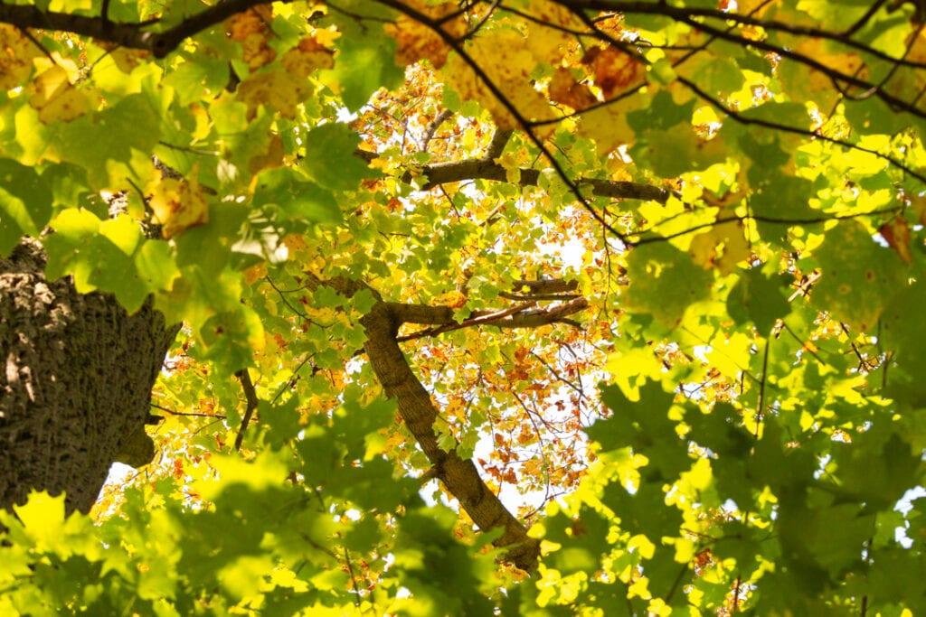 gorgeous fall nature photos