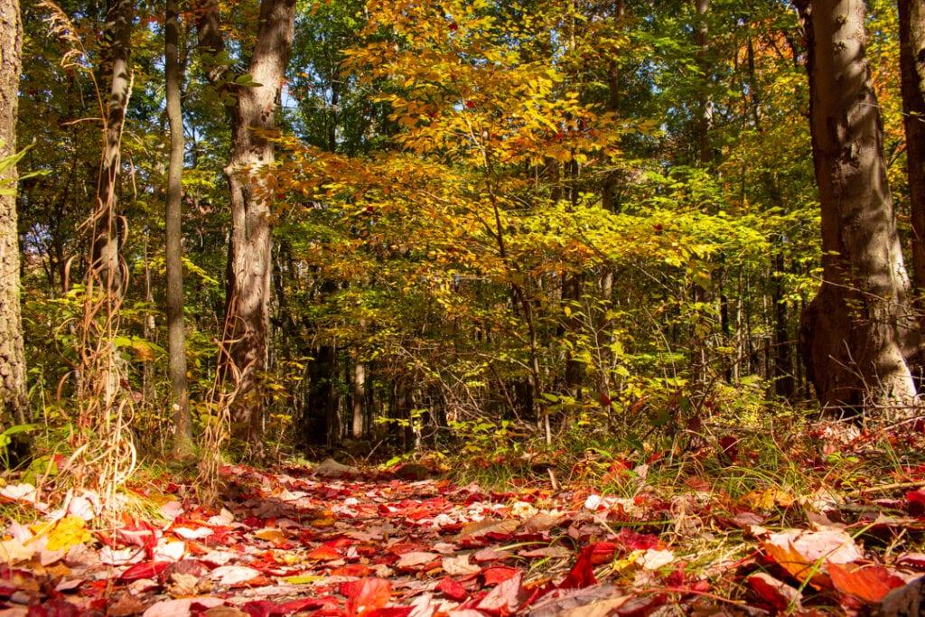 Fall Photo Ideas