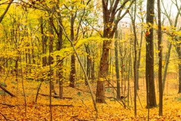 Nature Photography Hiking Adventure