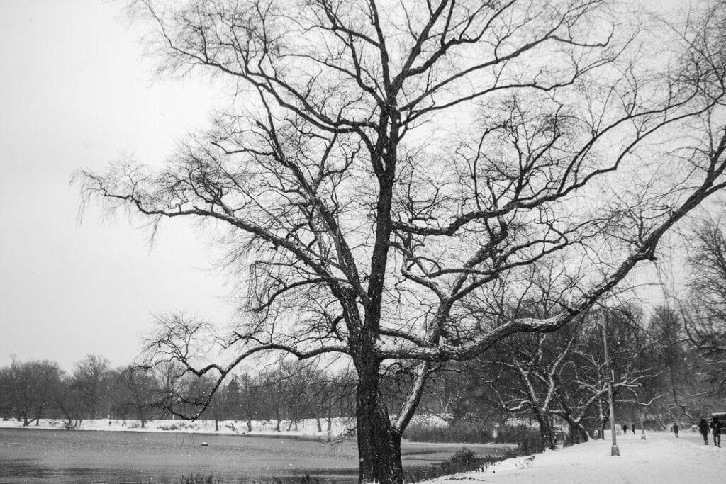 NY winter storm in prospect  park