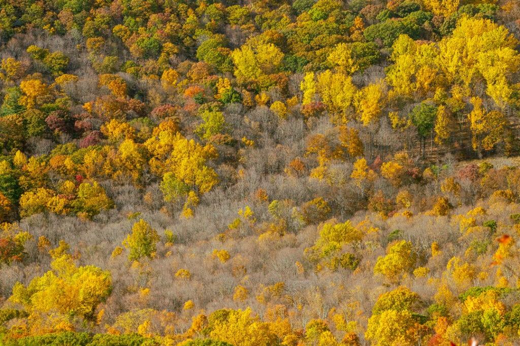 Autumn in Hudson Highland State Park