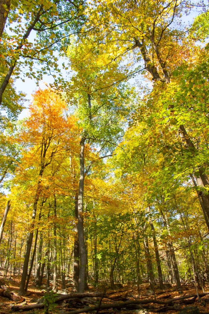 best nature photos of fall