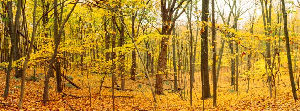 Hudson Valley hiking trail