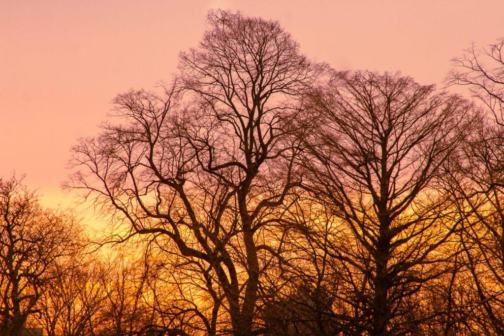 Beautiful winter sunrise photography