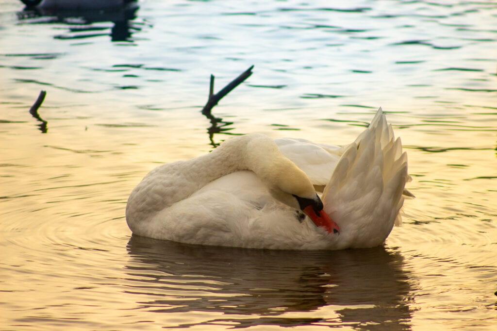 macro wildlife photography