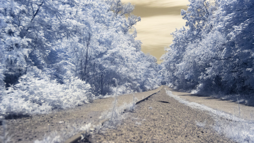 Infrared Landscape on the Hiking Trail
