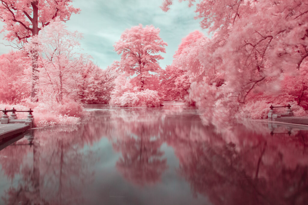 Brooklyn's Prospect Park in Pink Infrared Photography